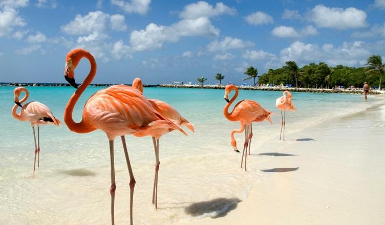 Zboruri spre Aruba